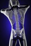 Exploración humana de la radiografía ilustración del vector