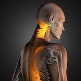 Exploración humana de la radiografía Imagen de archivo libre de regalías