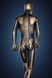 Exploración humana de la radiografía con los huesos ilustración del vector