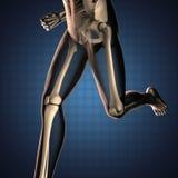 Exploración humana de la radiografía con los huesos stock de ilustración