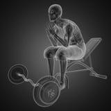 Exploración humana de la radiografía en sitio de la gimnasia Imágenes de archivo libres de regalías