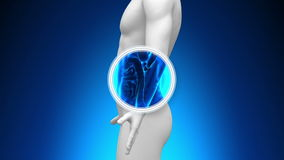 Exploración médica de la radiografía - tripa stock de ilustración