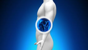 Exploración médica de la radiografía - vesícula biliar ilustración del vector