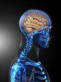 Exploración médica del cerebro humano stock de ilustración