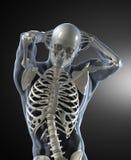 Exploración médica del cuerpo humano Fotos de archivo libres de regalías