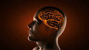 Exploración realista de la radiografía del cerebro humano ilustración del vector