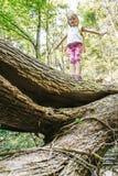 Explorador de niña audaz que coloca en un inicio de sesión caido el bosque Fotografía de archivo libre de regalías
