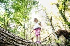 Explorador de niña resuelto que coloca en un inicio de sesión el bosque Imagen de archivo libre de regalías