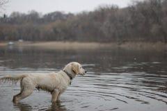 Explorador del perro Foto de archivo
