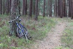 Explorando a floresta Imagens de Stock