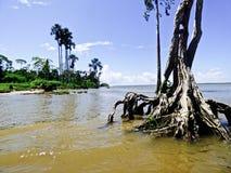 Explorando o Rio Amazonas foto de stock royalty free