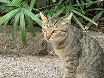 Explorando os gatos no estilo de vida das ruas imagem de stock