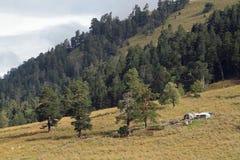 Exploração agrícola alpina Foto de Stock