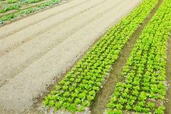 Exploração agrícola com produto Foto de Stock Royalty Free