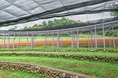 Exploração agrícola de Cingjing, Nantou County, Taiwan Imagens de Stock Royalty Free