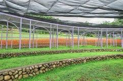 Exploração agrícola de Cingjing, Nantou County, Taiwan Imagem de Stock