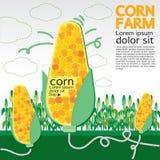 Exploração agrícola do milho. Imagem de Stock