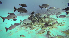 Exploration Underwater in San Andres Colombia stock video footage