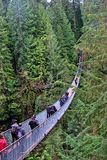 Explore the Capilano Suspension Bridge royalty free stock photography