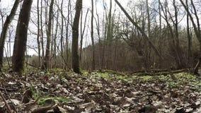 Explore el bosque que mira en el bosque almacen de metraje de vídeo