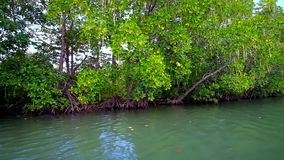 Red Mangrove forest, Chaung Tha, Myanmar. Explore the forest of red mangrove plants on Kangy river, traveling on canoe from  Chaung Tha tourist village, Myanmar stock video