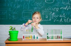 Explore and investigate. School lesson. Girl cute school pupil play with test tubes and colorful liquids. School. Chemical experiment. School education royalty free stock photography