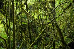 Explore Rain forest background with green mosses and fern Royalty Free Stock Photos