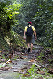 Explore rainforest. Man hiking in a thick rainforest royalty free stock photography