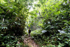 Explore rainforest. Man hiking in a thick rainforest royalty free stock photo