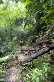 Explore rainforest. Man hiking in a thick rainforest stock images