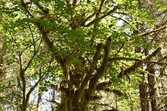 Explorer Falls Tree Stock Photography