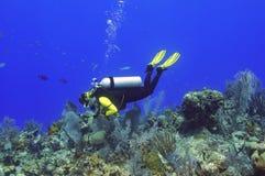 Explorer le teef Image stock