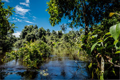 Exploring the Amazon Jungle. Deep in the Amazon Jungle of Venezuela via its rivers and enjoying nature stock photos