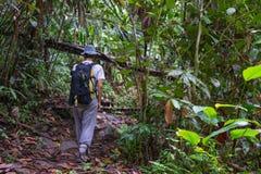 Exploring Borneo rainforest Royalty Free Stock Image