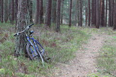 Exploring the forest. Biking through the dense forest Stock Images