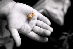 Exploring nature. A snail on a childs hand Stock Photography
