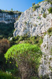 Exploring Pantalica. Typical vegetation in the valley of Pantalica necropolis in Sicily with a high white rocky wall of the canyon royalty free stock photography