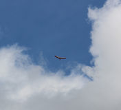 Exploring The Sky. A hand glider gracefully flies out of the clouds and into the blue sky Stock Photo