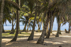 Exploring small caribbean Island, San Blas Islands Royalty Free Stock Photos