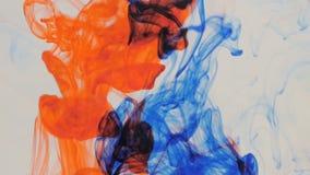 Explosão colorida da tinta no fundo branco video estoque