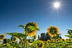 Explosão de Sun Imagem de Stock