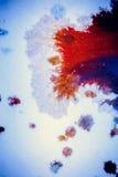 Explosões da pintura colorido Fotos de Stock Royalty Free