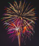 Explosões peludos Fotos de Stock Royalty Free