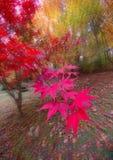 Explosión de color de la caída Imagen de archivo