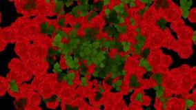 Explosión del fondo de la animación de las rosas rojas y de las hojas Canal alfa incluido