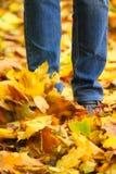 Explosión del otoño Foto de archivo libre de regalías