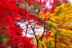 Explosiegezoem van de kleuren van het de herfstblad Stock Fotografie
