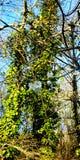 Explosion des Frühlinges stockbild