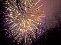 Explosion of fireworks. A bright explosion of fireworks amongst the treetops Royalty Free Stock Photography