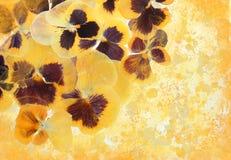 Explosion florale de soleil Images libres de droits